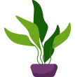 image plant footer